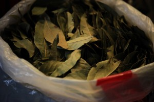 A newly released UN report warns coca production increased significantly in Colombia in 2014.